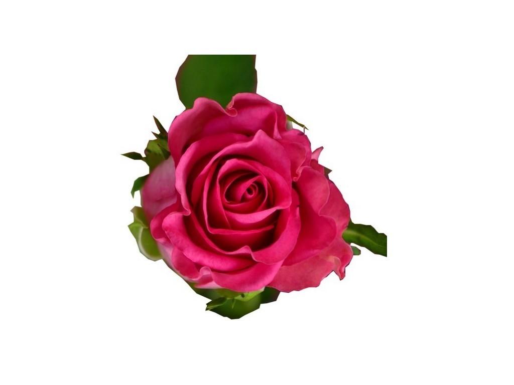 De fleur en fleur Tourcoing