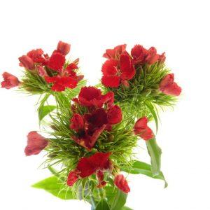 Fleurs en vase