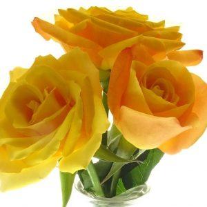 Rose de couleur jaune orangéege