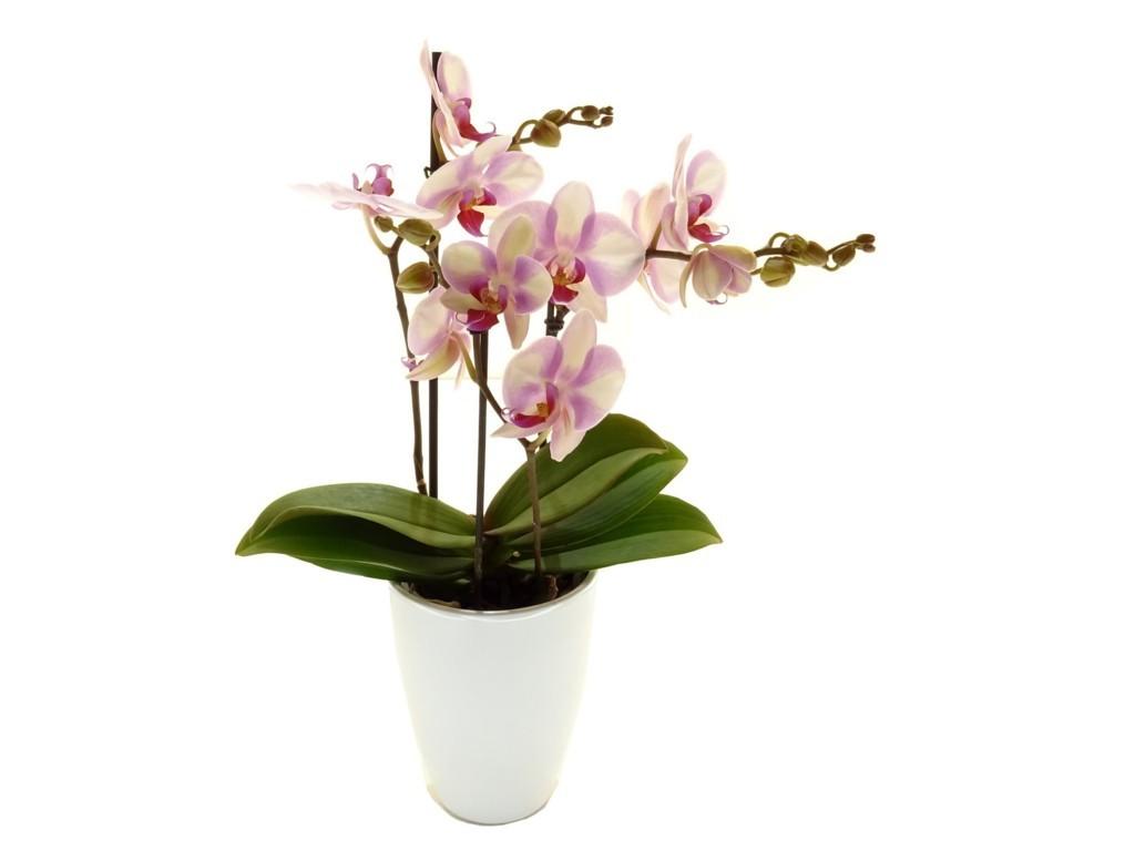 Comment S Occuper D Un Orchidée conseil d'entretien - de fleur en fleur - fleuriste dans le nord