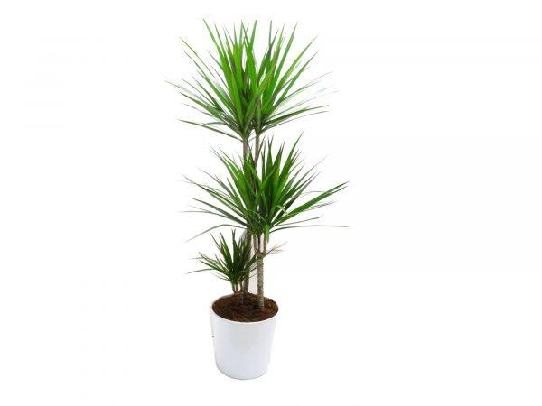 offfri-une-plante
