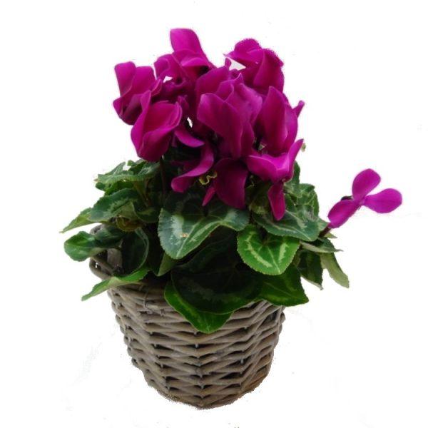 offrir-une-plante