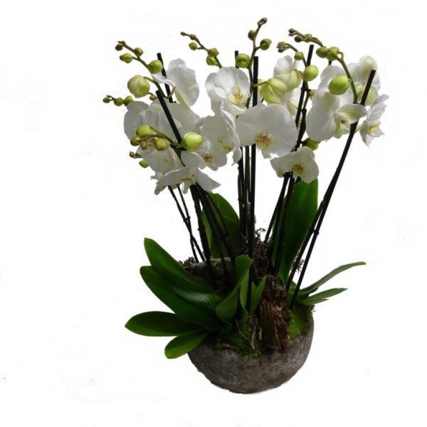 fleuriste-a-wasquehal
